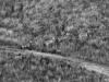 03 zebras seen by God