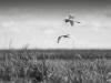 05 freedom of birds