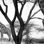 Jan_Svatos_Africa_Obscura_(8)_(1)maly