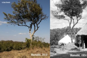 MARTINS-DARKROOM_Marsabit-forest_preview1